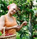 Die Ernte im Obst- und Gemüsegarten Baden läuft auf vollen Touren
