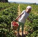 Erdbeeren selber pflücken - Stuttgart
