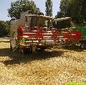 Getreideernte 2010