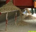 Getreidernte läuft in Süddeutschland auf Hochtouren