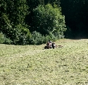 Im gesamten Schwarzwald wurde gestern zeitgleich gemäht und geschwadet  (06.08.2007)