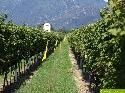 Starenschreck in Ascona