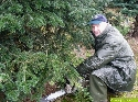 Tannenbaum Christbaum Weihnachtsbaum, Fichten, Nordmanntanne Küstentanne, Kiefern, Omorikafichte, Blaufichte, Douglasie, Schwarzkiefer