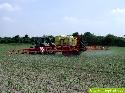 Teilflächenspezifische Unkrautbekämpfung in Mais
