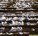 Treppe im Winter