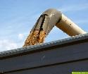 Unbeständiges Sommerwetter bedroht restliche Feldbestände bei Getreide