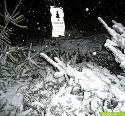 Weihnachtsbäume nicht wegwerfen!