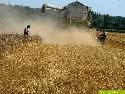Weizenernte in Steinheim