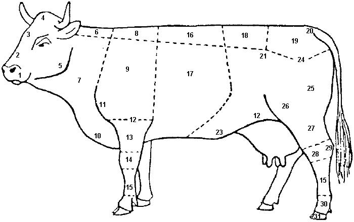 Kuh - Anatomie | Fotos | proplanta.de