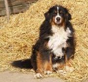alimentos para perros labrador welpen kaufen nahe stuttgart. Black Bedroom Furniture Sets. Home Design Ideas