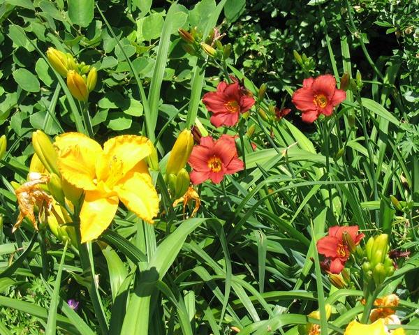 Garten Zierpflanzen Stauden Ratgeber Proplantade