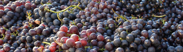 Berühmt Wein | Düngung | www.proplanta.de #SS_28