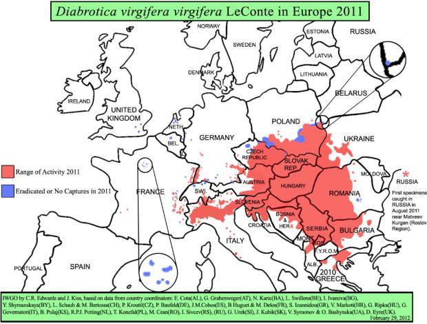 Diabrotica Verbreitung Europa 2011