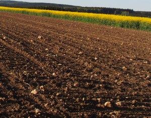 Biokohle news for Boden zusammensetzung