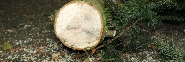 Weihnachtsbaum halle selber schlagen
