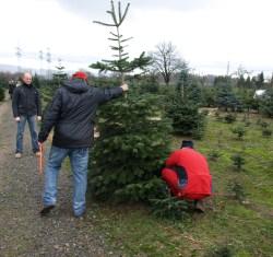 Weihnachtsbaume thuringen selber schlagen