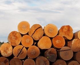 Holzhandel Karlsruhe laubholz laubholzpreise holzwirtschaft holz forstwirtschaft