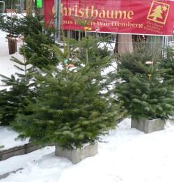 Weihnachtsbaum kaufen wien