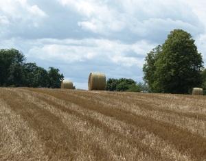 Bodenpreise Frankreich