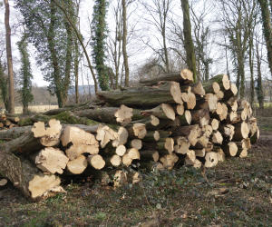 Holzpreis Thema Proplantade