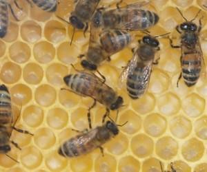 Bienen Uberwinterung Thema Proplanta De