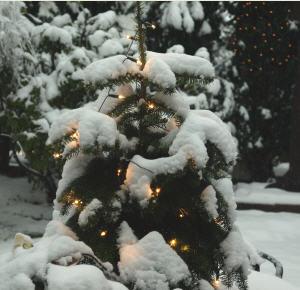 Schneeprognose Weihnachten 2019.Weiße Weihnachten Thema Proplanta De