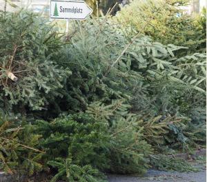 Weihnachtsbaum Selber Schlagen Berlin Brandenburg.Weihnachtsbaum Selber Schlagen Sachsen Thema Proplanta De