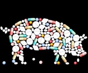 Antibiotika Tierhaltung