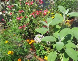 So Wird Der Balkon Bienenfreundlich Proplanta De