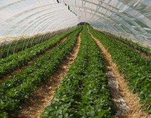 neues beratungssystem st rkt gartenbaubetriebe