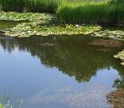 Keine angst vor algen im gartenteich for Gartenteich algen entfernen