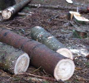 Niedrige preise fur eichenholz erzielt proplantade for Eichenholz preise