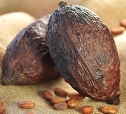 schattenseite der schokolade kinderarbeit auf kakaoplantagen. Black Bedroom Furniture Sets. Home Design Ideas