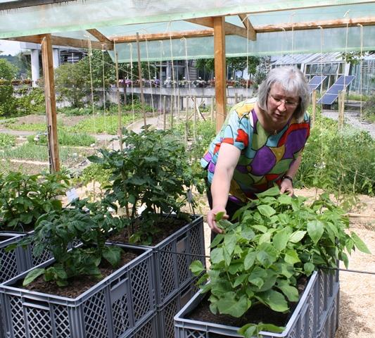 Kistengarten Fur Seniorengerechten Gemuseanbau Proplanta De