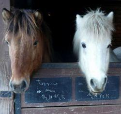 Nahles Pferd