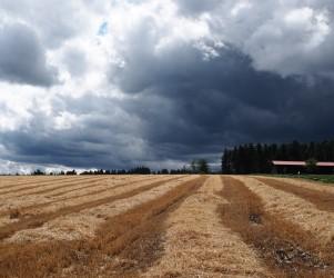 10-Tage-Wettervorhersage für Deutschland vom 31.07.2019