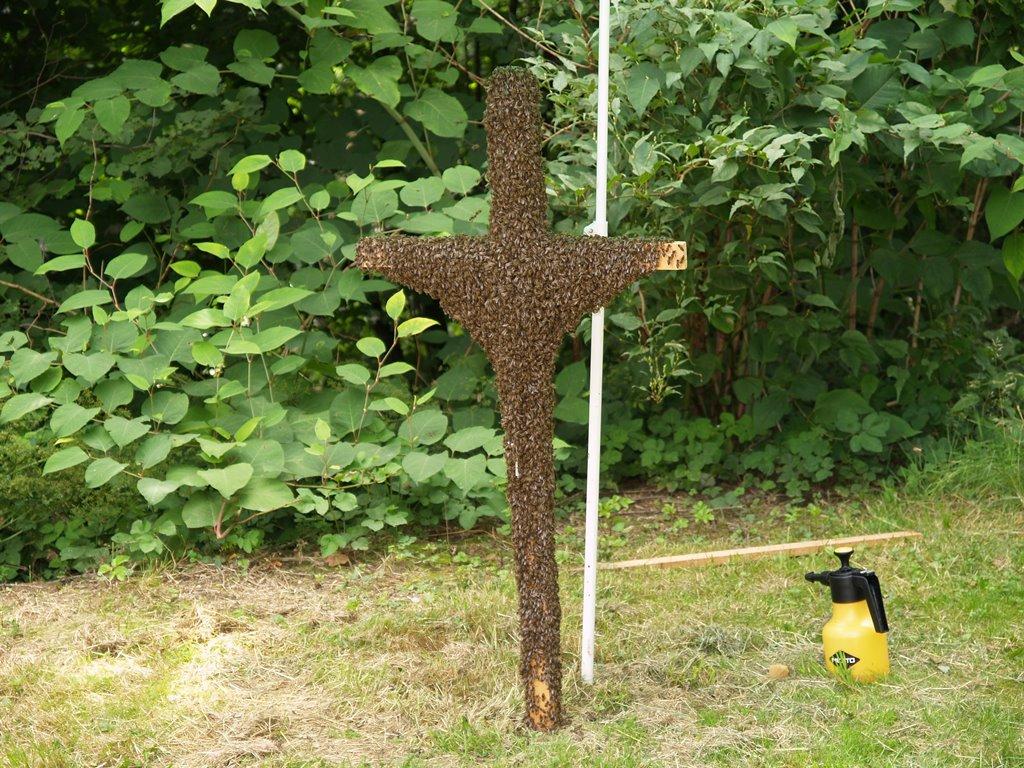 Bienen Volksbegehren: Volksbegehren Rettet Die Bienen: Eine Halbe Million Hat