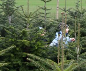 Weihnachtsbaum selber schlagen karlsruhe