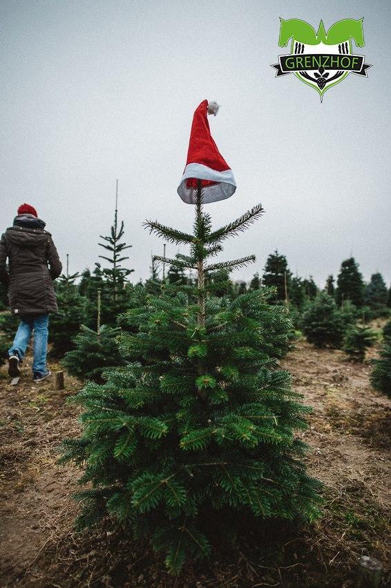 Tannenbaum Selber Schlagen Düsseldorf.Weihnachtsbäume Selber Schlagen Beim Grenzhof Maps Proplanta De