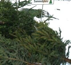 österreich Weihnachtsbaum.Kostenlose Christbaum Entsorgung In österreich Proplanta De