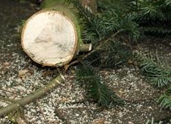 Christbaum Maps Weihnachtsbaum Anbieter Im überblick Proplantade