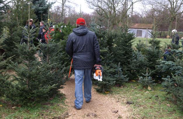 Weihnachtsbaumpreise 2021