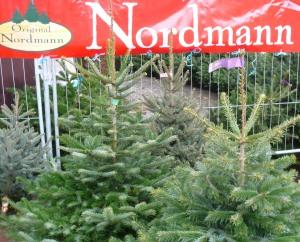 Weihnachtsbaum berlin preise europ ische weihnachtstraditionen - Weihnachtsbaumverkauf obi ...