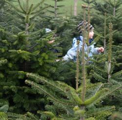 Mecklenburg vorpommern weihnachtsbaumverkauf der for Weihnachtsbaumverkauf hamburg