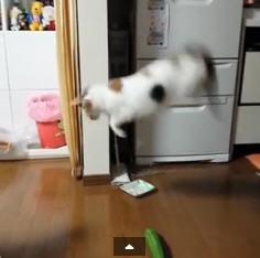 Katzen Angst Vor Gurken