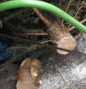 Tannenbaum Selber Schlagen.Weihnachtsbaume Selber Schlagen Hier Eintragen Maps